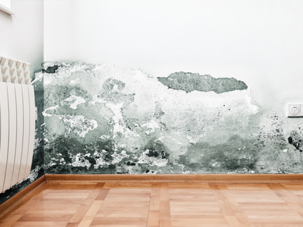 Learn how to spot the signs of mold